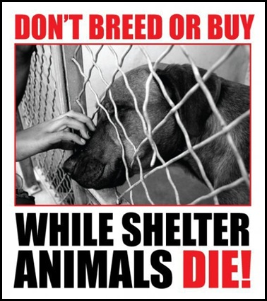 Adopt a Shelter Animal!