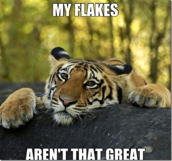 funny-captions-photos-12