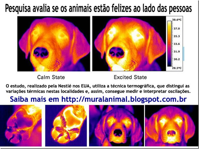 pesquisa_nestle_animais