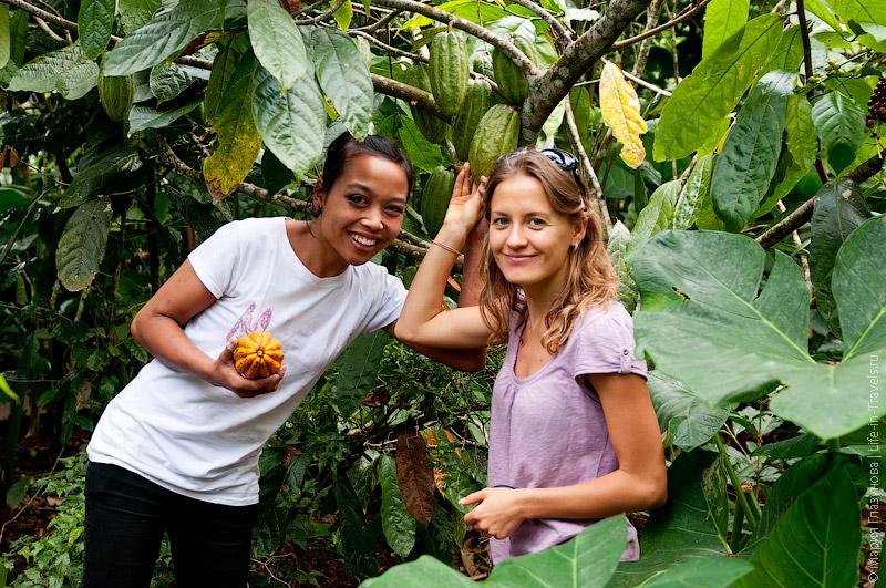 Выращивание какао