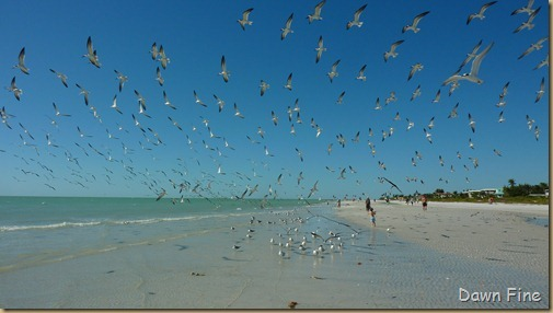 Sanibel Shell and birds_179