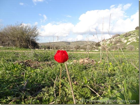 2012-01-20 Flower Hill Tatti Haviva 064