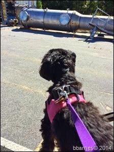 Maggie on patrol 10052014