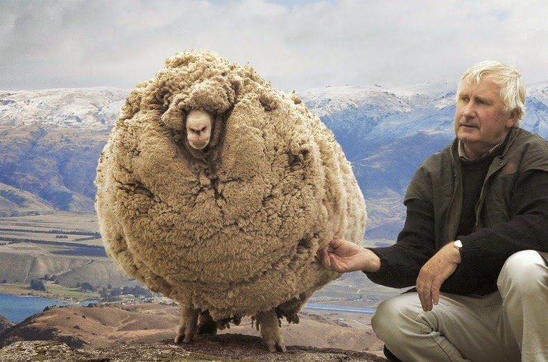 shrek-the-sheep-6