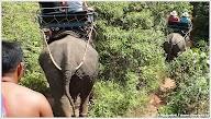 Прогулка на слонах