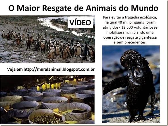 O Maior Resgate de Animais do Mundo