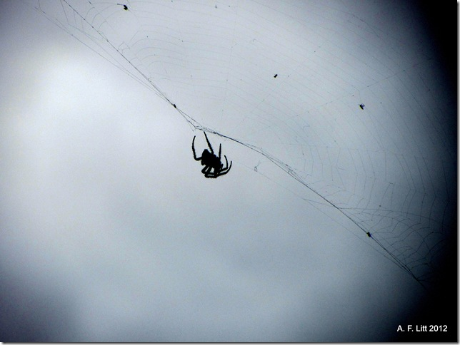 Spider.  Holly Ridge.  Gresham, Oregon.  March 3, 2012.  Photo of the Day, March 3, 2012.
