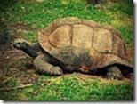 Tortoise-Turtles-Reptiles