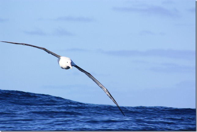 Pelagic 18 August 2012 011_small