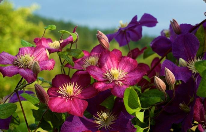 reddamselfarm880x550-25(pp_w925_h578)clare day flowers