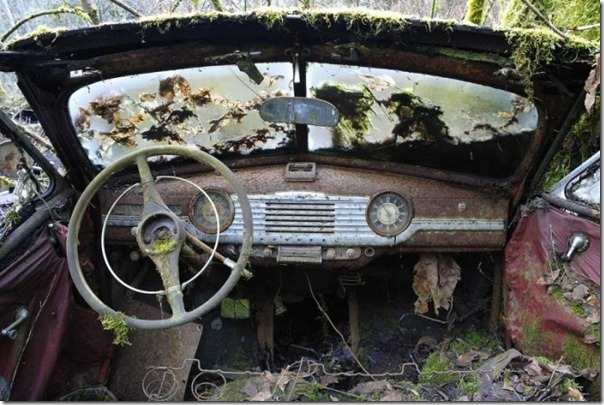 Cemitério de carros na floresta (6)