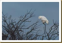 - Snowy treeROT_1680 January 02, 2012 NIKON D3S