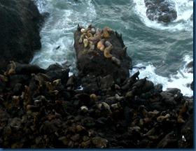Sea lions (3)