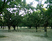 Mujibnagar-Mango-Grove_2.jpg