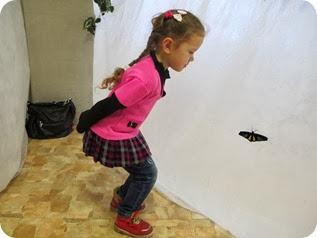 бабочки 094