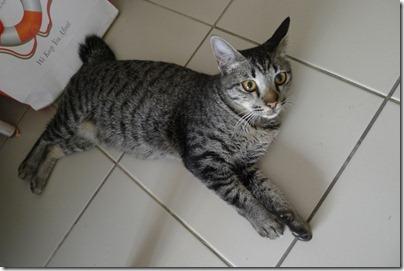 cat at my flat