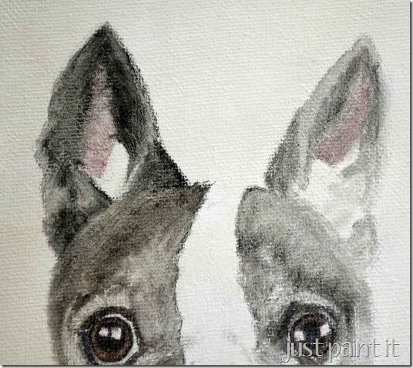boston-terrier-sketch-F