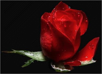 hermosa_flor______515797_t0