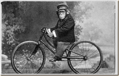 macaco na bicicleta