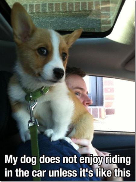 dog-mans-best-friend-30