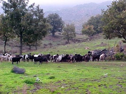 Κτηνοτρόφοι: Κάνουν απαγορευτική την κτηνοτροφία στην Κεφαλονιά