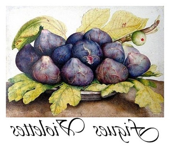figues violettes transfer
