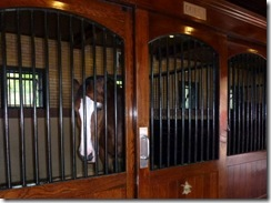 Duffy in his stable