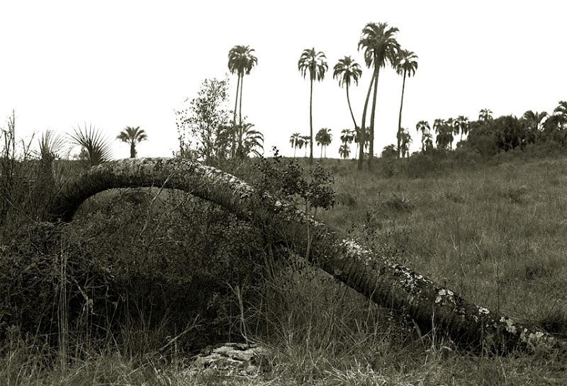 564  el final de una palmera