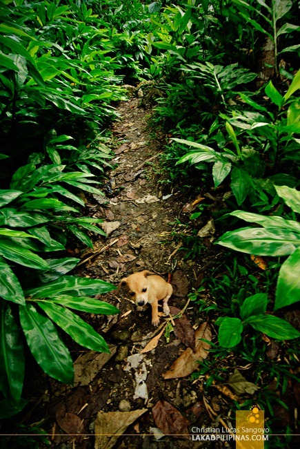 A Stray Puppy Following us Around Cambugahay Falls in Siquijor