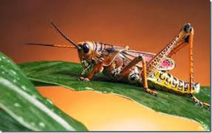 insectos dolor