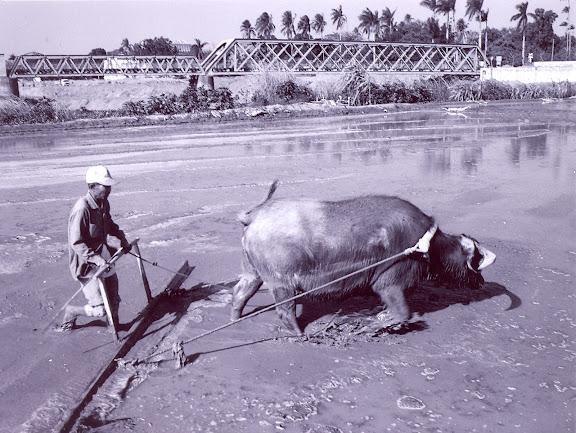 耕牛與鐵橋