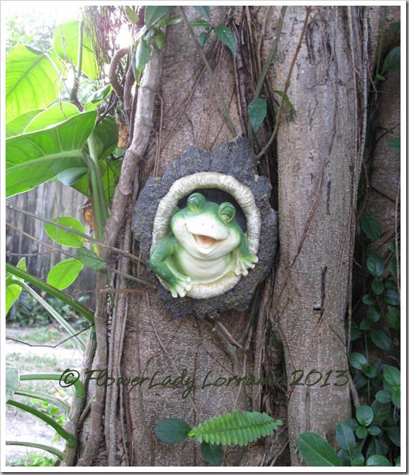 04-27-happy-frog