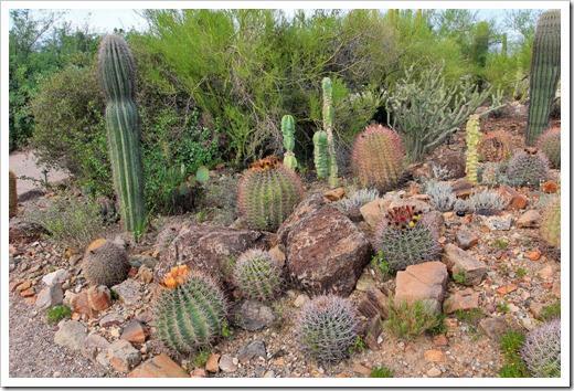 120728_ArizonaSonoraDesertMuseum_099[6]