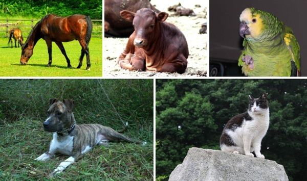 famous-heroic-animals