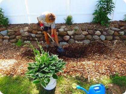 Marsha planting