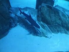 2015.01.25-068 requin