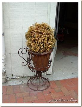 dead shrub