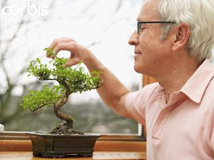 Como cultivar un bons i dise o y decoracion de jardines - Como cultivar bonsai ...