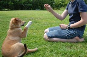 Adestramento para cães com biscoitos canino