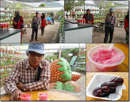 Cameron Highlands9