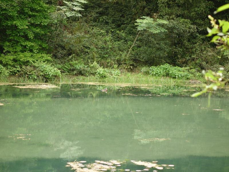 2013_0415-0418 福山植物園-6_017
