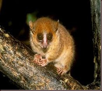 Amazing Pictures of Animals photo Nature exotic funny incredibel Zoo Lemur. Alex (4)