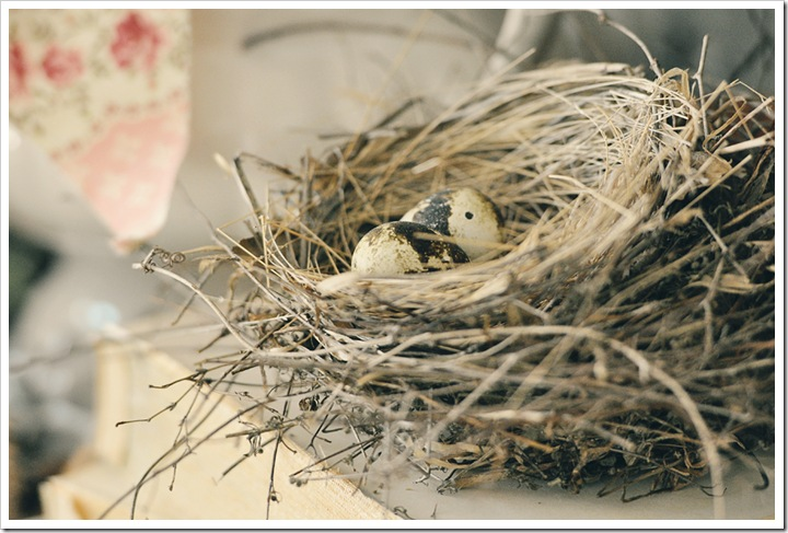 bird nests 008