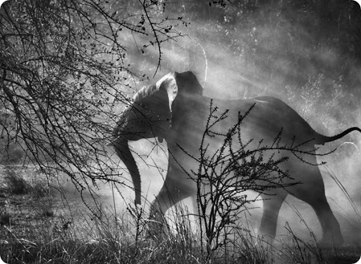 Genesis, nature, salgado, photographic collection
