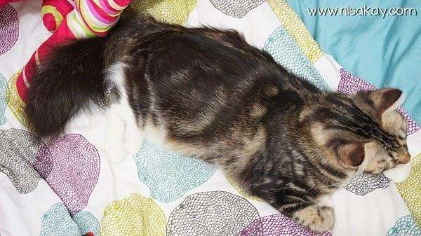 Kucing Nisakay 4