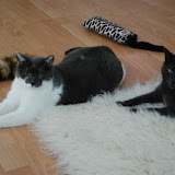 Unsere Katzen 2012