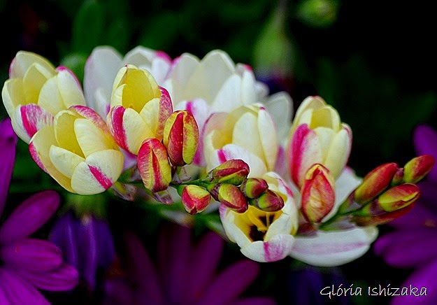 Glória Ishizaka - flor 7