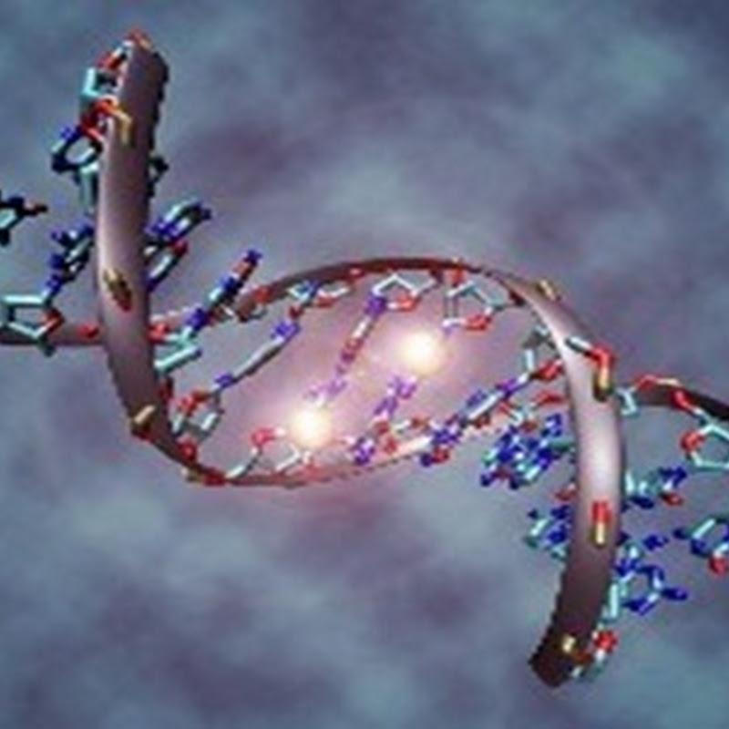 Células biocombustibles se convierten en una esperanza de nueva gama de organos artificiales, impulsada por electricidad