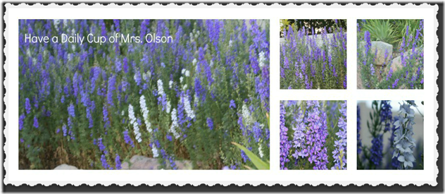 Larkspur Collage framed