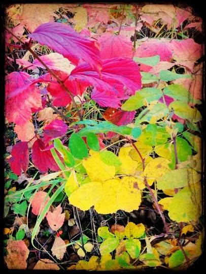 fall_4